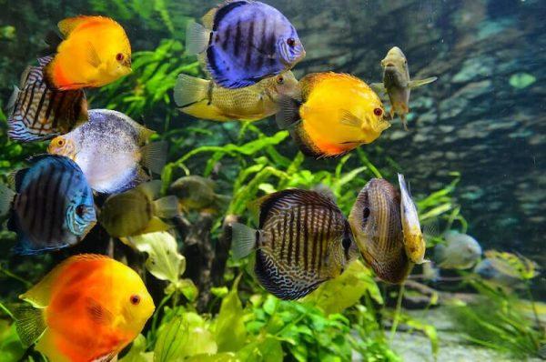 ózongenerátor akvárium